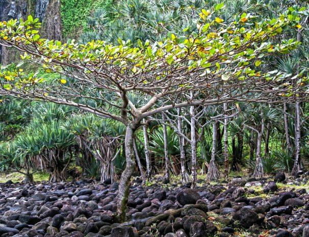 tree-521201_1920