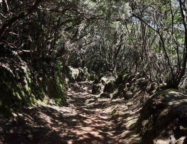 Anaga Cloud Forest