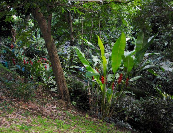 rainforest-grenada